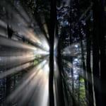 ライトシェア・デュエットの効果とは?